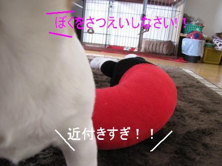 みっきー?8-1