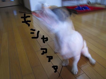 2010-10-03 489-1