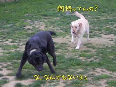 20100501_16.jpg