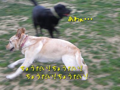 20100501_17.jpg
