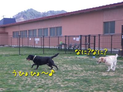 20100501_20.jpg