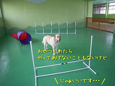 20100501_21.jpg