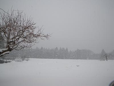 20110116_2.jpg