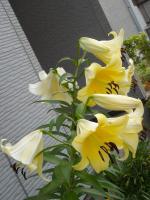 DSCN0990-2_convert_20100706084432.jpg