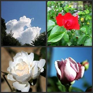 秋の薔薇コラージュ