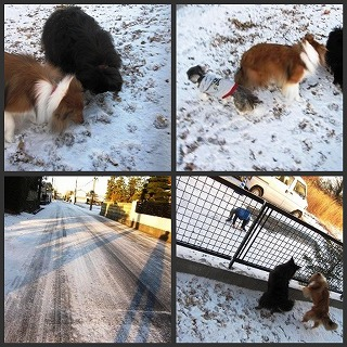 2011117雪1