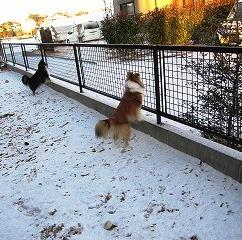 2011117雪2