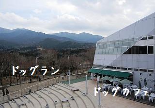 201102202a.jpg