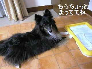 20111104.jpg