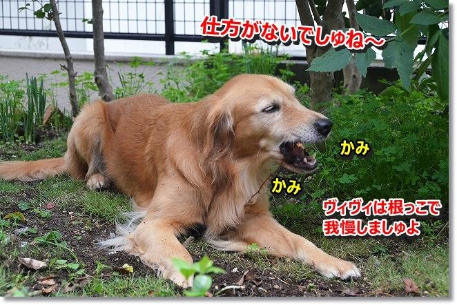 DSC_3147_201311190810041f9.jpg