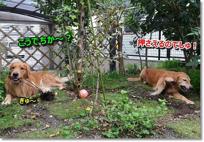 DSC_3150_20131119081006f90.jpg