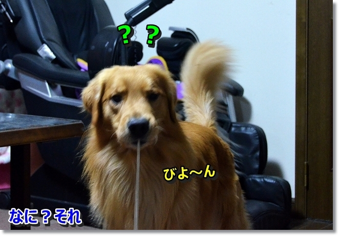 DSC_3176_201311211035539aa.jpg
