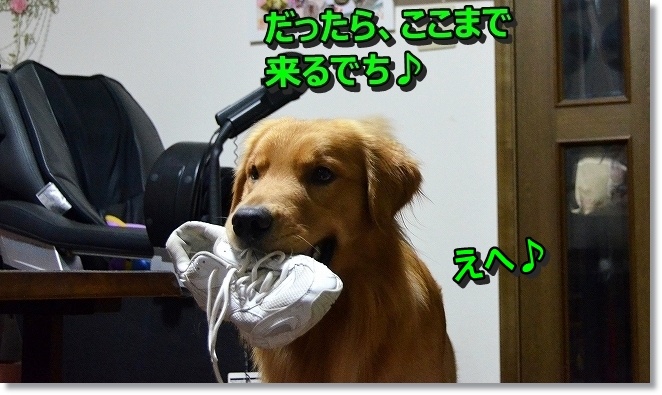 DSC_3191_20131121103657e93.jpg