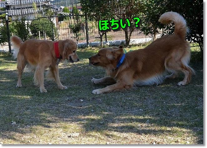 DSC_3290_201312032333031f6.jpg