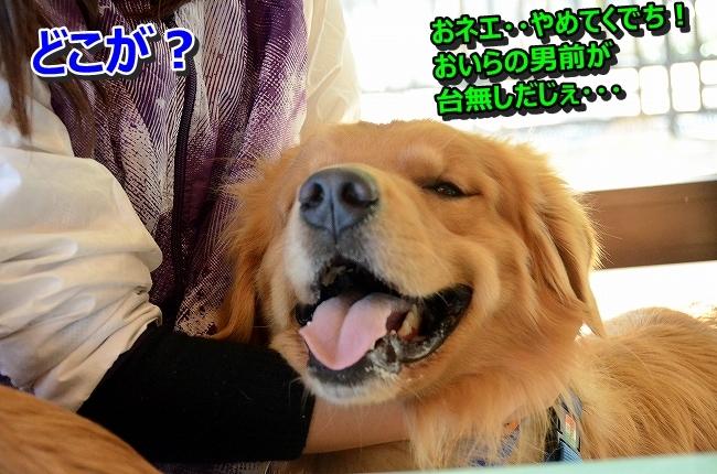 DSC_3322_20131203233519ee6.jpg