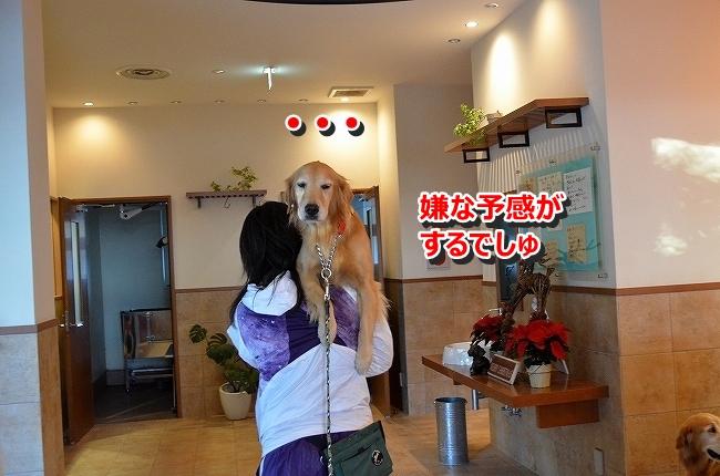 DSC_3545_201312051047471f0.jpg