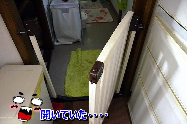 DSC_4378_20131218102959005.jpg