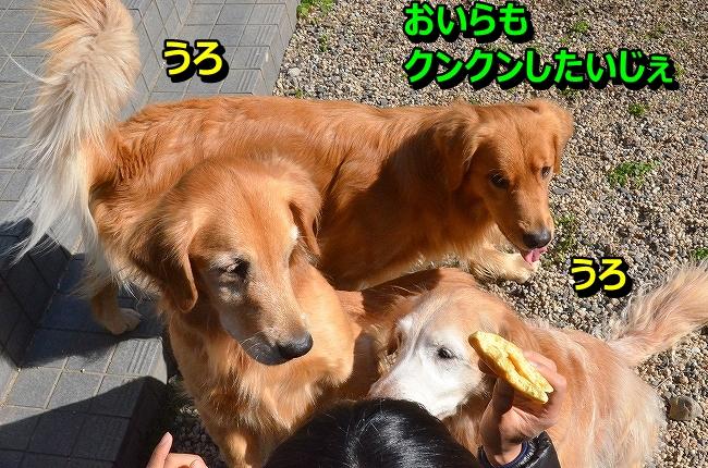 DSC_4410_2013121911281951e.jpg