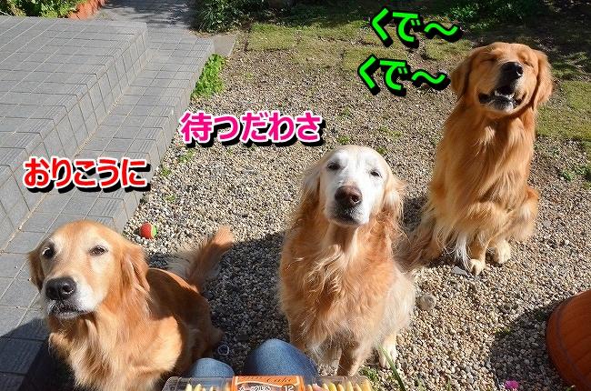 DSC_4417_20131219112842081.jpg