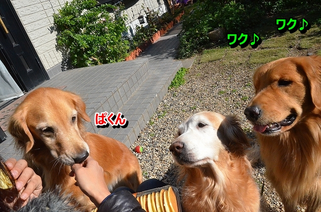 DSC_4429_20131219112950db6.jpg
