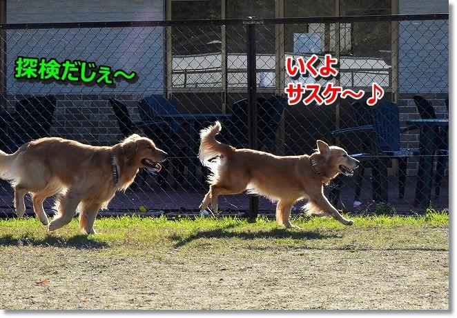 DSC_4451.jpg