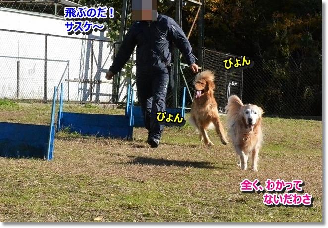 DSC_4463_20131201001535c61.jpg