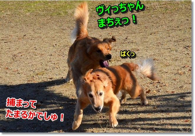 DSC_4476_20131201001551198.jpg