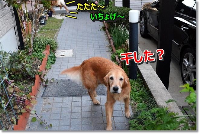 DSC_4680.jpg