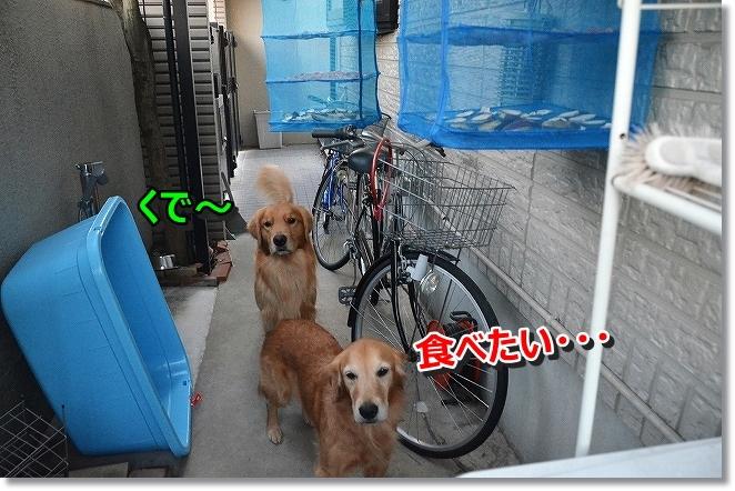 DSC_4686_201311301201094ef.jpg