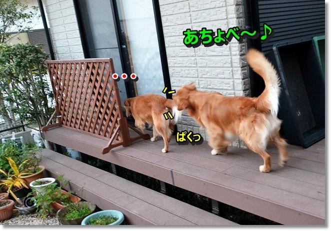DSC_4713.jpg
