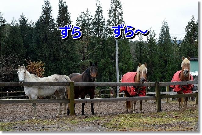 DSC_4895_201312131644290c7.jpg
