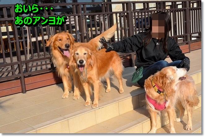 DSC_5430_201312192037057e6.jpg