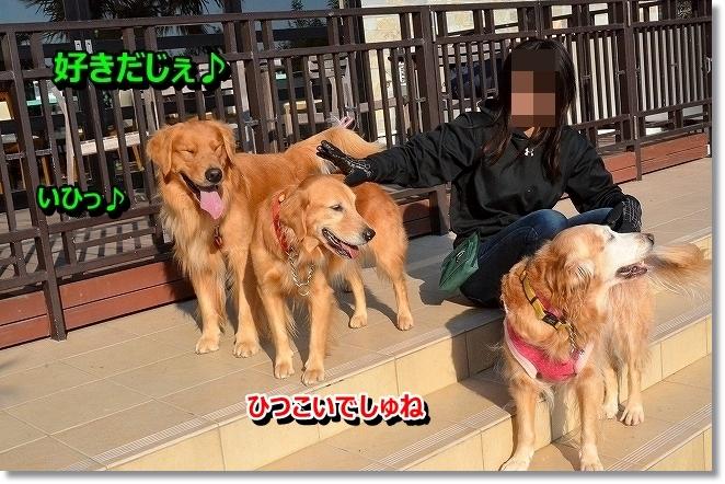 DSC_5431_201312192037065fd.jpg