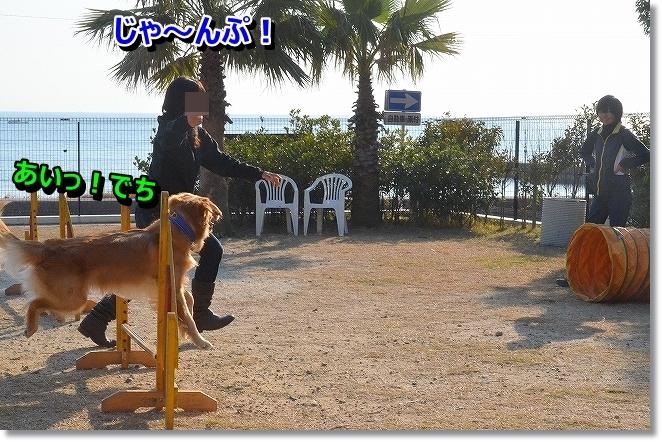 DSC_5458_20131219203821d14.jpg