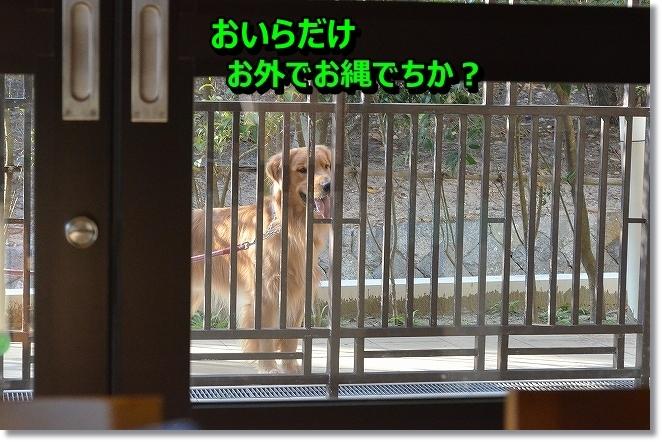 DSC_5474_201312211450151c9.jpg