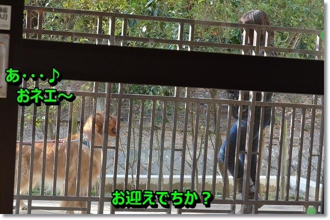 DSC_5477_20131221145017bc4.jpg
