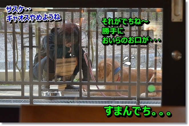 DSC_5487.jpg