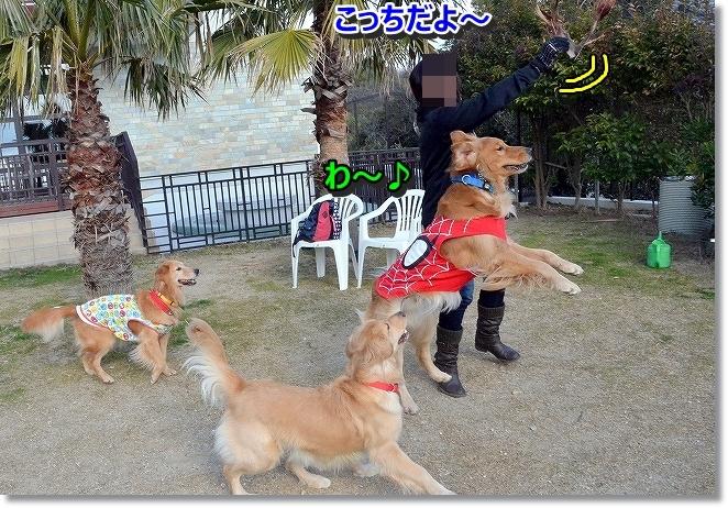 DSC_5665_201312091233422f8.jpg