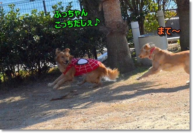 DSC_5841_201312100018333ef.jpg