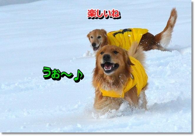 DSC_6081.jpg