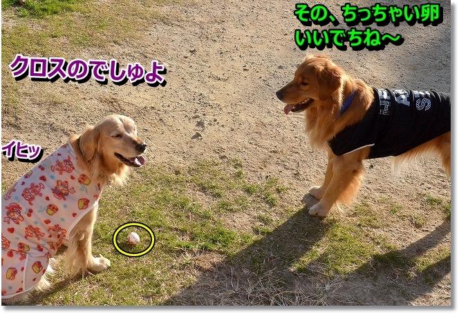 DSC_6601_201312240953549d6.jpg