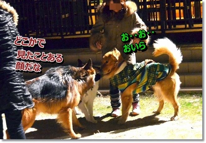 DSC_6655_201312251930481e4.jpg