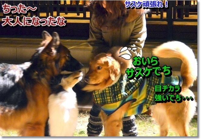 DSC_6656_20131225193107cb7.jpg