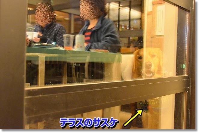 DSC_6687_20131225193247842.jpg