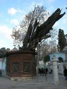 ジャミーの大きな木