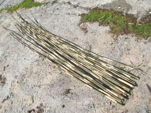 山から竹06