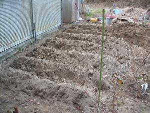 菜園20130101