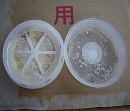 菌糸 ふた