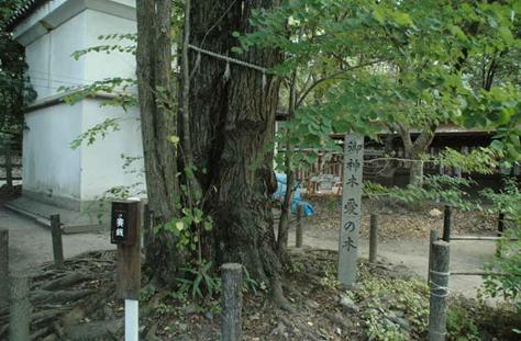 梨木神社 愛の木001