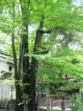 梨木神社 愛の木006
